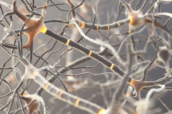 nervecells in orange color